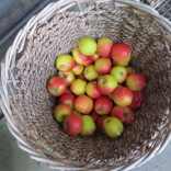 Äpfel waren das große Thema